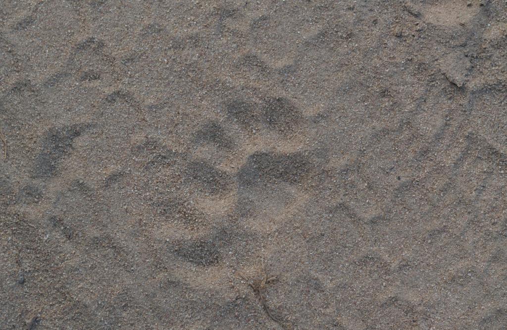 Leoparden Tatze