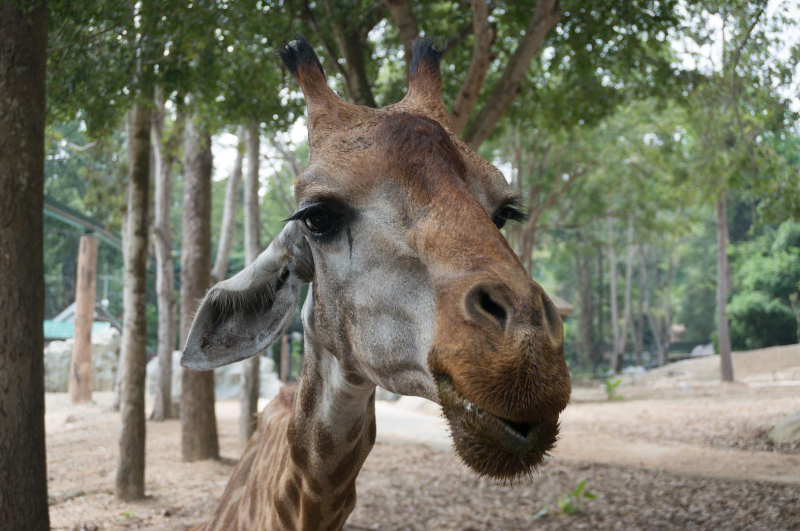 Chiang Mai Zoo