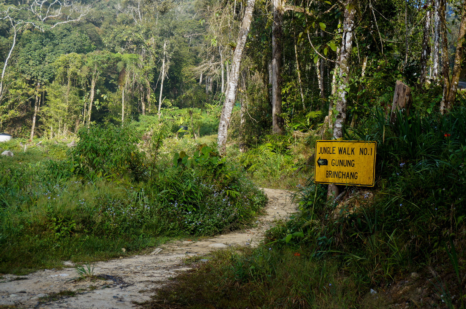 Cameron Highlands Trail 1