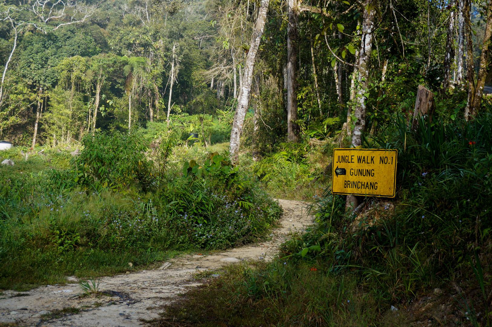Cameron Highlands Trail 1