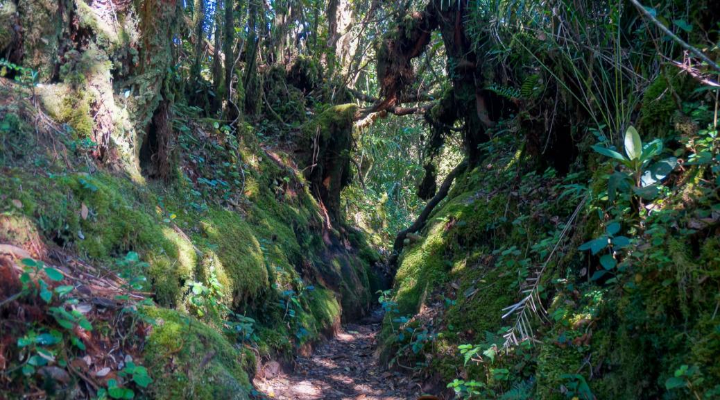 Cameron Highlands Trekking die 2.