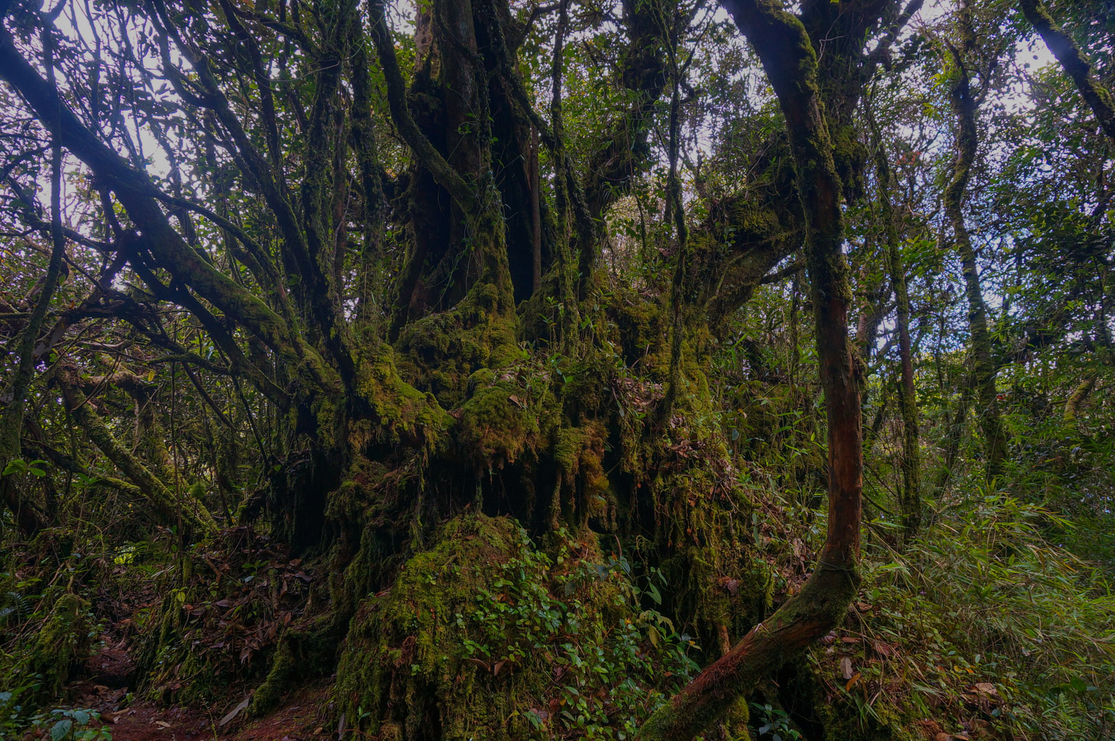 Mossy Forest Moos Wald Trail 1