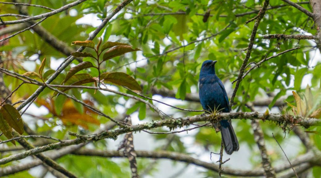 Biotopo de Quetzal