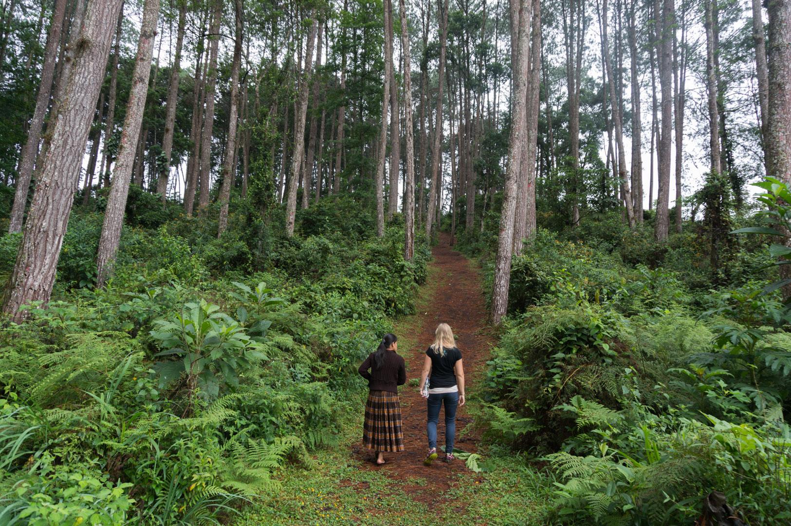 Kleiner Wald zwischen den Plantagen